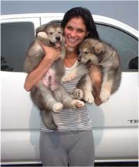 Hudson's Malamutes - Christian Pitre (Adult Sparkle)  with Hudson's puppies at the movie Sparkle and Tooter