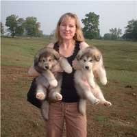 Hudson's Malamutes - Sparkle's movie mom before makeup with puppies at the movie Sparkle and Tooter